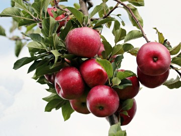 ¿Necesitas madurar la fruta? Take Fruit te trae las claves